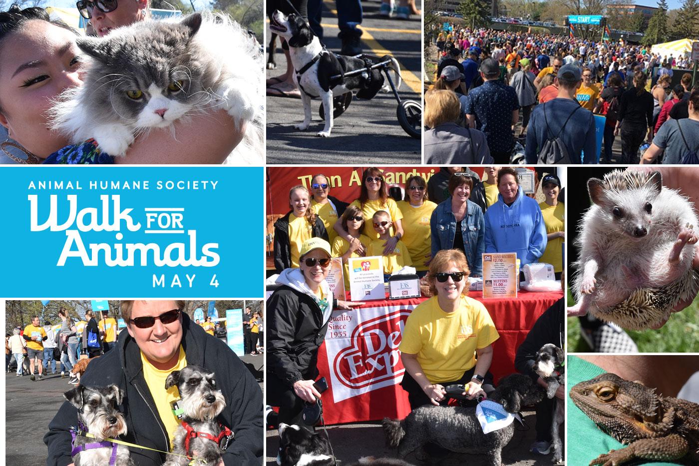 Animal Humane Society A Huge Success